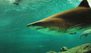 Cierran playas de Miami por ataques de tiburón