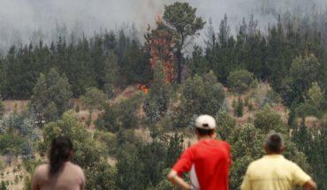 FNE denunció cartel de empresas de combate y extinción de incendios forestales ante el TDLC