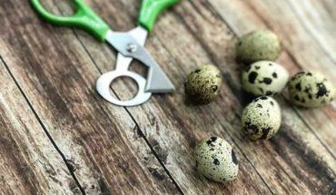 Huevos de Codorniz ALEXANDRIA   #huevosdecodorniz #colombia #cali #buenaventura #buga #tulua #andalucia #bugalagrande #z...