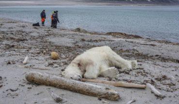 Mataron a oso polar cuando turistas visitaban el Ártico de Noruega