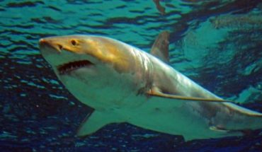 Melissa dio de comer a un enorme tiburón y todo termino mal