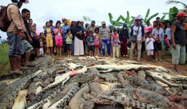 #Noticia desde #Cuba Masacre contra la naturaleza: Matan a cerca de 300 cocodrilos en Indonesia  #SomosContinuidad...