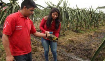 #Noticias #Ecuador  Palora, la tierra de la pitahaya que va a Estados Unidos   ...