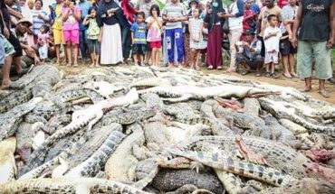 Para vengar la muerte de un hombre, vecinos matan casi 300 cocodrilos de un refugio