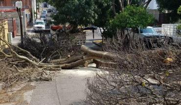 Por derribo de árboles, piden tomar precauciones en Bosques de la Huerta en Morelia, Michoacán