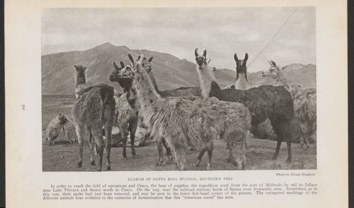 Spotted: 1st edition report of #MachuPicchu with maps + photos, incl. ones of llamas!  Full report here:  #llama #peru #...