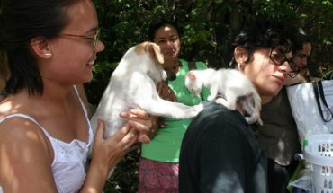 Un grupo de activistas pide que se reconozcan los derechos de los animales en la nueva Constitución. #Cuba ...