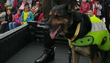 Un peligroso cartel narco ofrece 7.000 dólares por la cabeza de Sombra, una perra policía