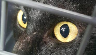 #VEC #Castraciones #Cat #Gata #Uruguay re mimosa esperando su turno  en Atlántida, Canelones, Uruguay ...