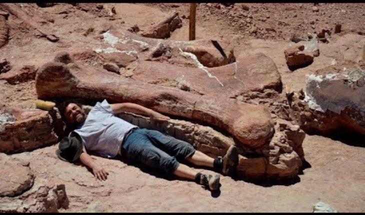 Hallan al dianosaurio gigante más grande de la Tierra