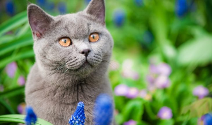 ¿Por qué en Nueva Zelanda quieren prohibir los gatos?