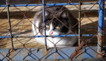 Acusan a albergue de matar gatos congelándolos en Indiana