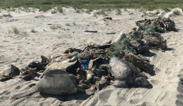 Al menos 500 tortugas golfinas fueron encontradas muertas atrapadas en una red en Oaxaca (Video)