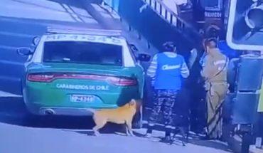 Carabineros inició una investigación contra funcionario que mató a un perro de un balazo