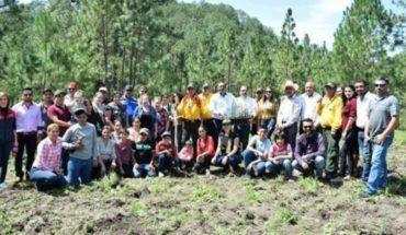 Conafor entrega 15 mil pinos navideños a Surutato