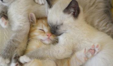 cat-cute-family-kitten-Favim.com-2172727