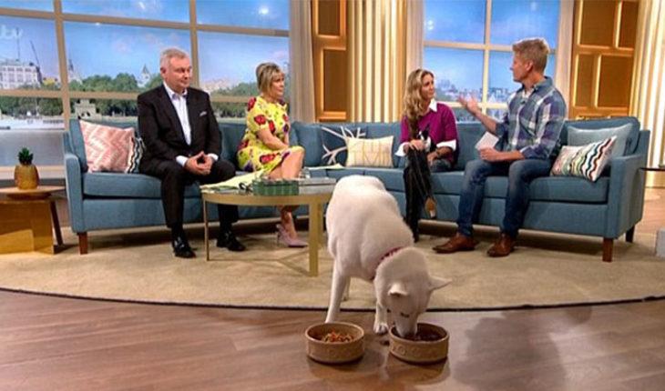 En EUA, mujer asegura que su perro es vegetariano; el can elige comer carne en programa de TV