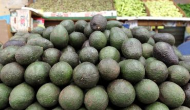 Hasta en $64 pesos venden el kilo de aguacate