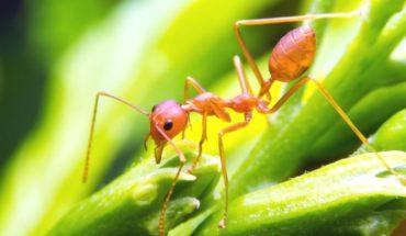 La lección de las hormigas sobre el ocio