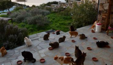 Ofrecen alojamiento, gastos comunes y 370 mil pesos por cuidar gatos en una isla