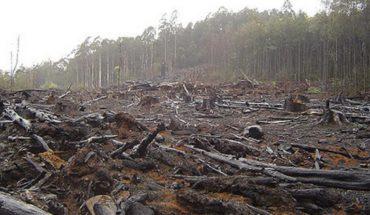 Paleontólogo afirma que la pérdida de biodiversidad podría precipitar la extinción humana