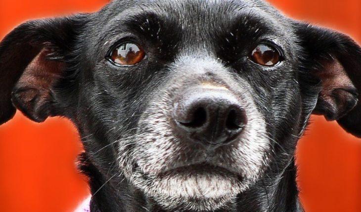 """Perrita derrama """"lágrimas"""" tras ser rescatada con sus cachorros"""