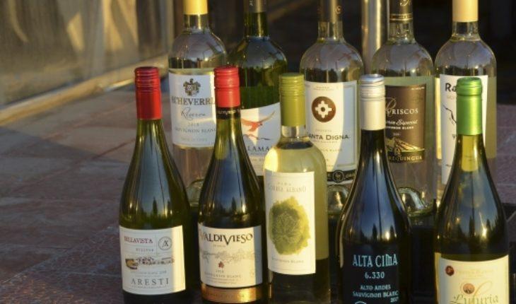 Sauvignon Blanc 2018: los nuevos protagonistas del Valle de Curicó