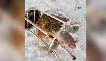 Tortuga marina es encontrada muerta atrapada en un taburete