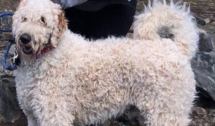 Una mujer murió en un accidente y su perro se quedó hasta que fue rescatado por su familia