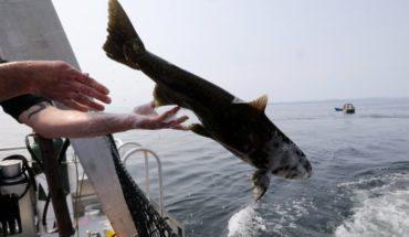 Dan Salmons live sick Orca, but don't eat them