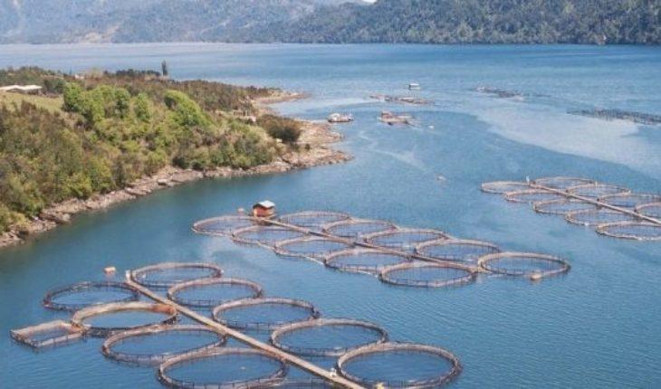 """Nuevo Premio Nacional de Ciencias endurece la crítica contra la industria salmonera: """"No es sustentable"""""""