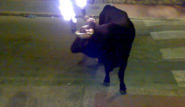 Video: Toro asustado con los cuernos en llamas embiste a mujer