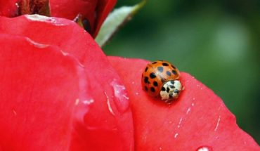 ¿Adiós insectos? Se teme que estén en declive