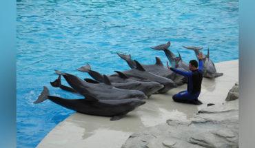 ¿Están estresados los delfines en cautiverio?