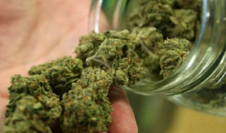 """Canadá busca emplear a """"catadores de marihuana"""""""