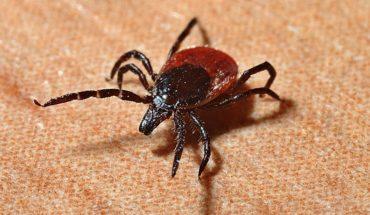 Enfermedad de Lyme: síntomas de que podrías estar infectado