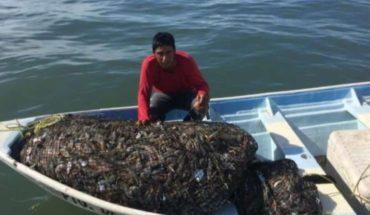 Pescadores de Dautillosy Altatareportan hasta 700 kilos por embarcación