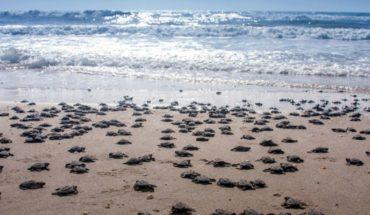 Rechazan construcción de resort en Tulum por tortugas