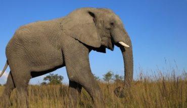Una turista murió aplastada por un elefante en un parque natural