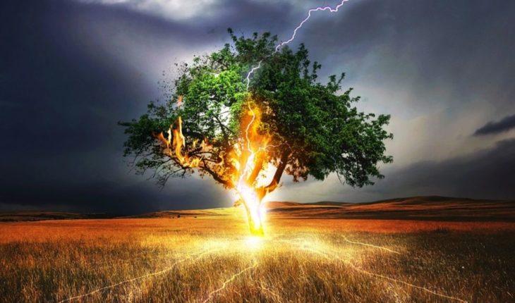 ¡Brutal! Poderoso rayo cae en árbol y trueno genera terror