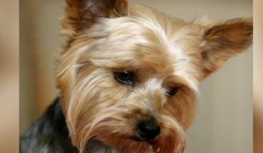 Condenan a mujer por dejar morir a su perro de hambre en España