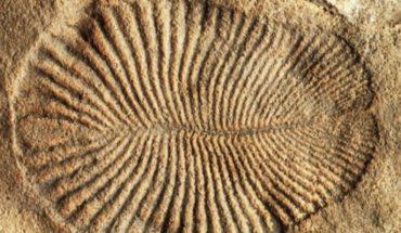El misterio del Dickinsonia, el animal más antiguo del planeta, que vivió hace 558 millones de años