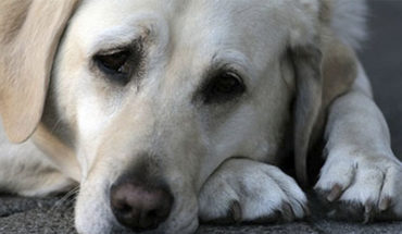 Right-on in network narration of a veterinarian on the latest actions of dogs before his death