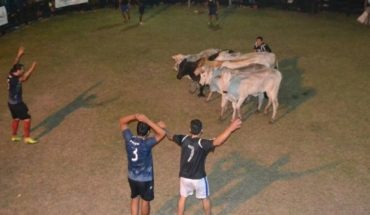 """""""Soccer boi"""", strange sport which is all the rage in Paraguay and is played with a cow"""