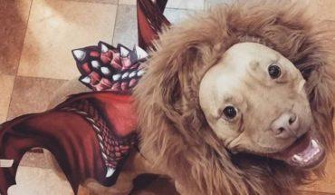 5 perritos que han arrasado en Halloween con su disfraz