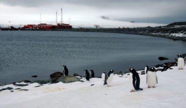 Científico ruso apuñaló a otro mientras cenaban en una base de la Antártida