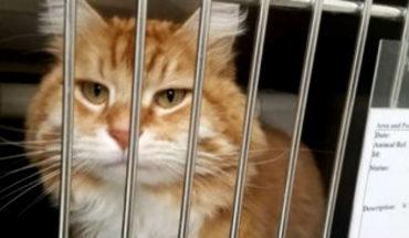 El gato que estuvo perdido más de un año, anduvo 1.500 kilómetros y regresó a la casa en avión