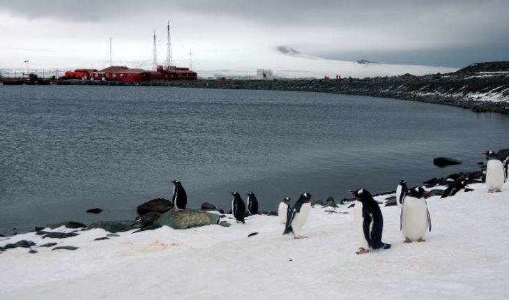 El motivo por el cual un científico ruso apuñaló a su colega en la Antártida según medios británicos