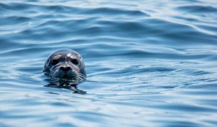 """El video que confirma que las focas son """"los perros del océano"""""""