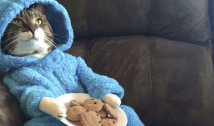 Embajada de EU se disculpa por la 'fiesta de gato en pijama'